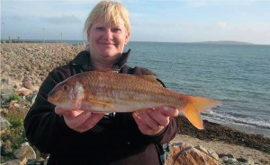 NEW RECORD – RED MULLET: 0.82 kg, Kilmore Quay, Co. Wexford, 20th September, 2010 – Sue Tait