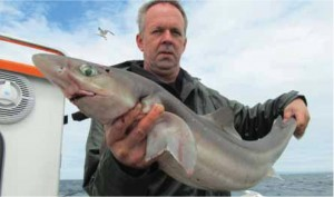 NEW RECORD SPUR DOGFISH: 10.6 kg, Red Bay, Co. Antrim, 25th July 2011 – Albert Koawenhourn (NL)