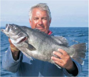 IRISH RECORD STONE BASSE: The New Irish Record Stone Basse of 11.72 lbs for UK angler Tony Rainer from Berkshire taken on 14 July 2005 fishing out of Baltimore