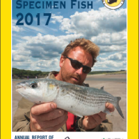 Mullet smashes old record – ISFC report 2017